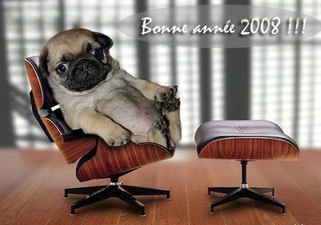 Trucs et astuces Bonne_annee_2008_animaux_joliecarte3